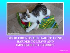 Good Friends Are Hard To Find, Best Friends, Therapy Dogs, Carpet, Cats, Animals, Google, Gatos, Animais