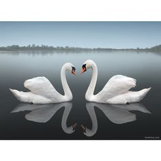 Awesome Photography Around The World, found on #polyvore.