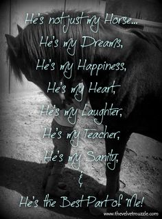 "I can't live without my horse; I never grew out of the ""I Love Horses So Freaking Much"" Stage, evidently. Cute Horses, Pretty Horses, Beautiful Horses, Equine Quotes, Equestrian Quotes, Equestrian Problems, My Horse, Horse Girl, Horse Tack"