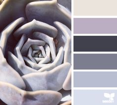 Succulent Tones - http://design-seeds.com/index.php/home/entry/succulent-tones12