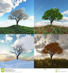 Find Lonely Tree Four Seasons Time Lapse stock images in HD and millions of other royalty-free stock photos, illustrations and vectors in the Shutterstock collection. Thousands of new, high-quality pictures added every day. Different Seasons, Zen Meditation, Seasons Of Life, Tree Crafts, Stock Foto, Months In A Year, Of Wallpaper, Art Plastique, Go Green