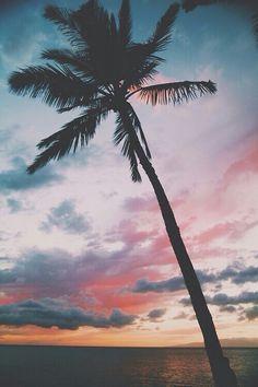 Америка, пейзаж, любовь, природа, океан, пальма, море