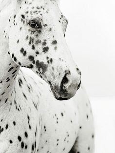 Spotted white horse : ) freckles