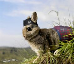 What do you get when you cross a rabbit with a kilt? ... Hopscotch. #scottish