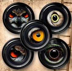 Camera Creature Eyes  Digital Collage Sheet by CobraGraphics, $3.90