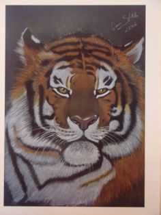 """Tiger...""""The Lord of Siberia"""""""