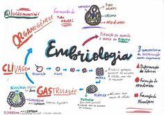 BIO - Embriologia