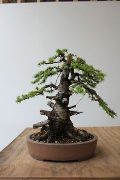 Nice caving work by my friend Will Baddeley     wildwoodbonsai: The Troll and other carving work in Denmark