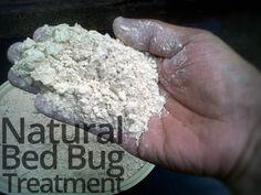 Natural bed bug treatment  #BedBugs #DIY #Natural