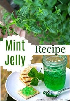 Minze-Gelee-Rezept Mint Jelly Rezept, Mint Jelly, Rezepte mit Minze, Canning Rezepte # Mint Recipes, Herb Recipes, Jelly Recipes, Canning Recipes, Freezer Recipes, Canning 101, Jam Recipes With Herbs, Canning Pears, Freezer Cooking