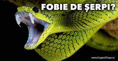 http://www.eugencpopa.ro/articole/blog/fobie-de-serpi-sau-posete-din-piele/ Ți-e frică de șerpi? Suferi de o fobie? Ei bine, vreau să știi că nu este nevoie să suferi! Poți să pui capăt acestei orori foarte rapid și pentru totdeauna! Dă click pe link și vezi cum se poate rezolva frica de șerpi (și orice altfel de frică) în doar 10 minute! Dacă nu crezi, mai uită-te odată!