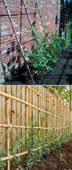 19 Successful Ways to Building DIY Trellis for Veggies and Fruits Using Bamboo to Build a Garden Trellis Against The Wall Successful Ways to Building DIY Trellis for Veggies and Fruits Using Bamboo to Build a Garden Trellis Against The WallUsing Bamboo to Tomato Trellis, Bamboo Trellis, Diy Trellis, Garden Trellis, Herb Garden, Garden Beds, Garden Walls, Trellis Ideas, Potager Garden