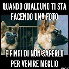 Quando qualcuno ti sta facendo una foto I Love Dogs, Puppy Love, Funny Images, Funny Pictures, Animals And Pets, Cute Animals, Baby Animals, Italian Memes, Funny Jokes