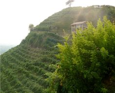 Exploring the Home of Italy's Favorite Sparkling Wine – Prosecco