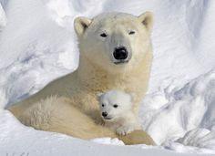 Tiere und ihre Babys_17.jpg (800×580)
