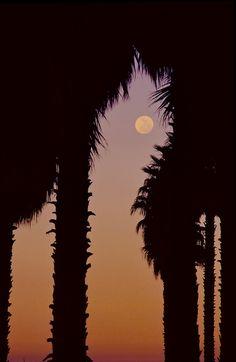 Lua Cheia atraves palmeiras com colorido crepúsculo