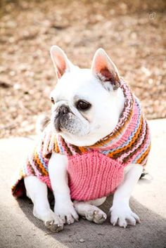 Pretty in pink knit stripes. Limited Edition French Bulldog Tee http://teespring.com/lovefrenchbulldogs