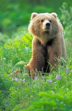 Hmmm...  A bear sitting in the grass wondering what to do with the rest of the day.     Where The Wild Things Are