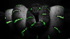 pics of snakes | girl, swimming, snakes, python, wallchan, animals, dark, black, green ... Brown Tree Snake, Beautiful Snakes, Most Beautiful, Animals Beautiful, Snake Wallpaper, Animal Wallpaper, Snake Images, Photo Artistique, Emerald Tree Boa