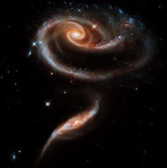 A 'rose' made of galaxies - STScI/AURA/NASA