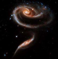 A 'rose' made of galaxies - STScI/AURA/NASA