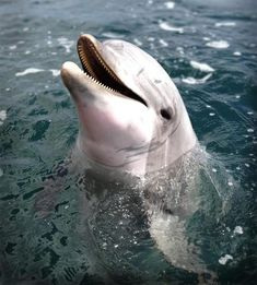 Dolphins may use ultrasound to detect a baby inside a pregnant woman.