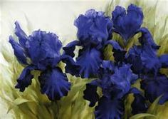 Igor Levashov - blue iris