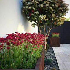 A kerítéseknél előszeretettel alkalmazzuk a növényeket, ezáltal a tér élettel telivé válik. 🌿🌷🏡 #kerítés #fence #teraszepites #teraszbudapest #terasz #urbangarden #lakberendezés #lakberendezésiötletek #kulsoepiteszet #budapest #kerites #fencedesign #fencebuilding Kitchen Ideas Victorian House, Bell Gardens, Bathroom Vanity Decor, Lovely Creatures, Small Backyard Landscaping, Winter Garden, Garden Furniture, Budapest, Gardening Tips
