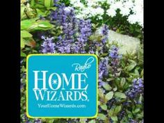 Ground Covers – Walkable and Worthy Alternatives to Grass - Home Wizards Outdoor Flowers, Outdoor Plants, Outdoor Gardens, No Grass Yard, Patio, Backyard, Grass Alternative, Growing Moss, Ground Cover Plants