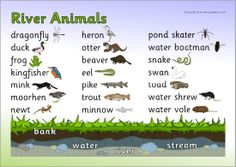 River animals word mat (SB10643) - SparkleBox