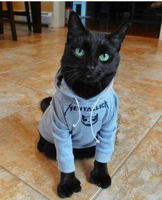polydactyl cat in a Metallica sweatshirt I Love Cats, Crazy Cats, Cool Cats, Funny Cats, Funny Animals, Cute Animals, Polydactyl Cat, Here Kitty Kitty, Sleepy Kitty