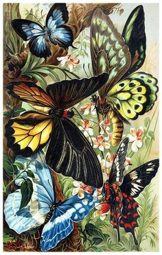 Kids room decor, copyright free book illustration of butterflies