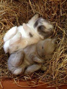 Sleepy bunnies