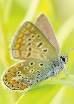 Lovely types of butterflies, 30 the most beautiful butterflies