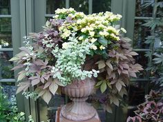 Shade: Solenia begonias, sweet potato vine, variegated licorice plant - replace tall grass in corner with a container of shade plants Container Flowers, Flower Planters, Container Plants, Flower Pots, Gemüseanbau In Kübeln, Garden Urns, Garden Arches, Container Gardening Vegetables, Container Gardening