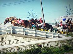 ばんえい競馬 Banei Horse race