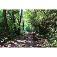 【shoki.nakamura】さんのInstagramの写真をピンしています。《林道  こういう雰囲気が好き  #広島#湯来町#石ヶ谷峡#林#木#林道#木の葉#緑#木漏れ日#光  #写真#景色#風景#カメラ#一眼レフ#キヤノン#Canon#EOS#70D#レンズ#シグマ》