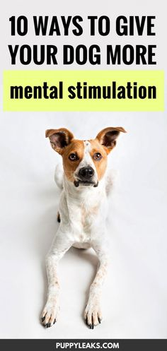 Giving your dog more mental stimulation can cut down on problem behaviors and enrich your dog's life. Using brain games to keep your dog busy also helps tire them out. Here's 10 ways to give your dog more mental stimulation. Mental Training, Training Your Dog, Training Tips, Potty Training, Brain Games For Dogs, Dog Games, Schnauzers, Diy Pet, Dog Training Techniques