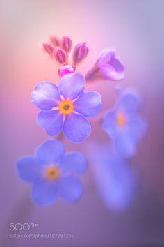 Soft light by TeroMakela #nature #photooftheday #amazing #picoftheday