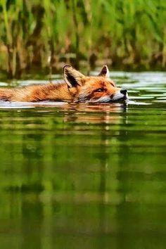 ...Wenn du schwimmen gehst...