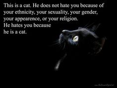 Reason number 8,000 that cats are awesome :P
