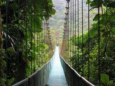 Long Bridge in the rain forest               Tatum