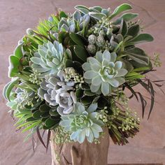 "Hand-tied bridal bouquet with Echeveria ""frosty,"" Echeveria ""Violet Queen,"" Echeveria coccinea, Mammillaria gracilis fragilis, green leucadendron, seeded eucalyptus and agonis"