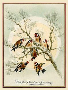 Goldfinches make a change from robins