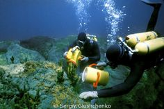 5110 Best Scuba images in 2019 | Diving, Snorkeling, Best