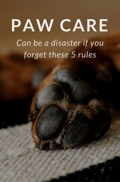 Paw care is important for the health of your dog! Paws need lots of taking care: learn how with these 5 tips and master how to handle paw care. Keep your dogs' feet clean and healthy, read on!