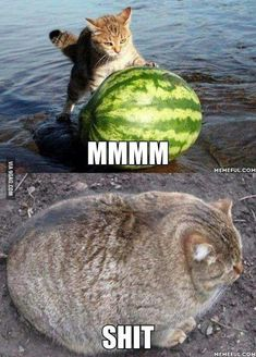 Why Cats Don't Eat Watermelon...