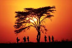 La variedad de reservas y parques nacionales de Kenia brinda paisajes diversos siempre bajo la mágica luz africana. La monotonotía no existe en los safaris por (...)
