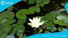 En las plantas de tratamiento de agua residual tratamos bien al agua ya que de ella depende la flora y fauna de nuestro planeta. Para mas información visita http://aclara.mx