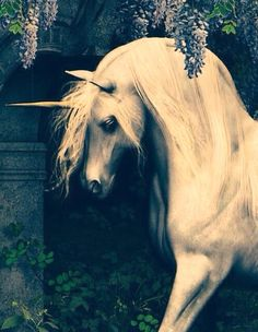Unicorn near Hogwarts
